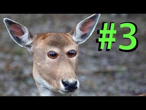 En Komik Hayvan Dublajları (GÜLMEK GARANTİLİ) #3