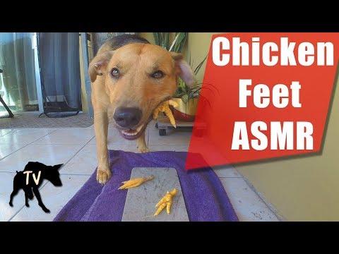 Raw Chicken Feet ASMR | Raw Feeding Vlog