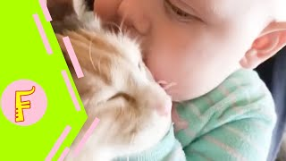 Baby and Cat Fun and Fails - Funny Baby Video thumbnail