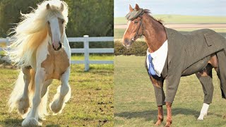 Funny and Cute Horse Videos Compilation - Hilarious Horse Videos #14