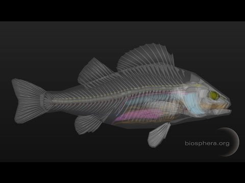 3D Fish Anatomy Software For Desktop