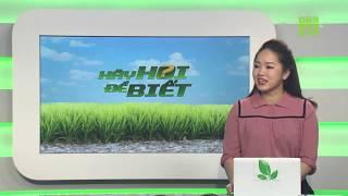 Mẹo cầm tiêu chảy cho lợn con | Hãy hỏi để biết sáng 19/09/2019 | VTC16