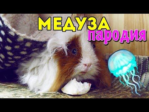 MATRANG - Медуза (ПАРОДИЯ...
