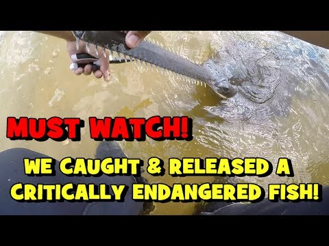 must-watch:-we-caught-&-released-a-critically-endangered-fish!!!-(2019-fort-myers-trip----3/3)
