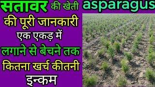 nepali shatavari ki kheti ki jankari||shatavari ki kheti kaise kare||asparagus in hindi thumbnail