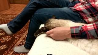 Люди скажите, пожалуйста, кошке чтобы не ленилась!