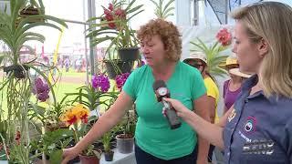Conheça as diferentes espécies de orquídeas