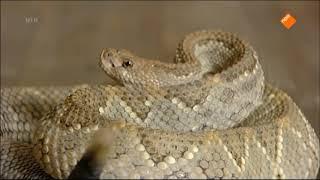 Huisje Boompje Beestje - Aflevering 135 | Slangen en Plagen/Pesten
