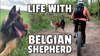 Día con un perro de pastor belga Vlog | Bikejoring | ¿Cómo lidiamos con las garrapatas?