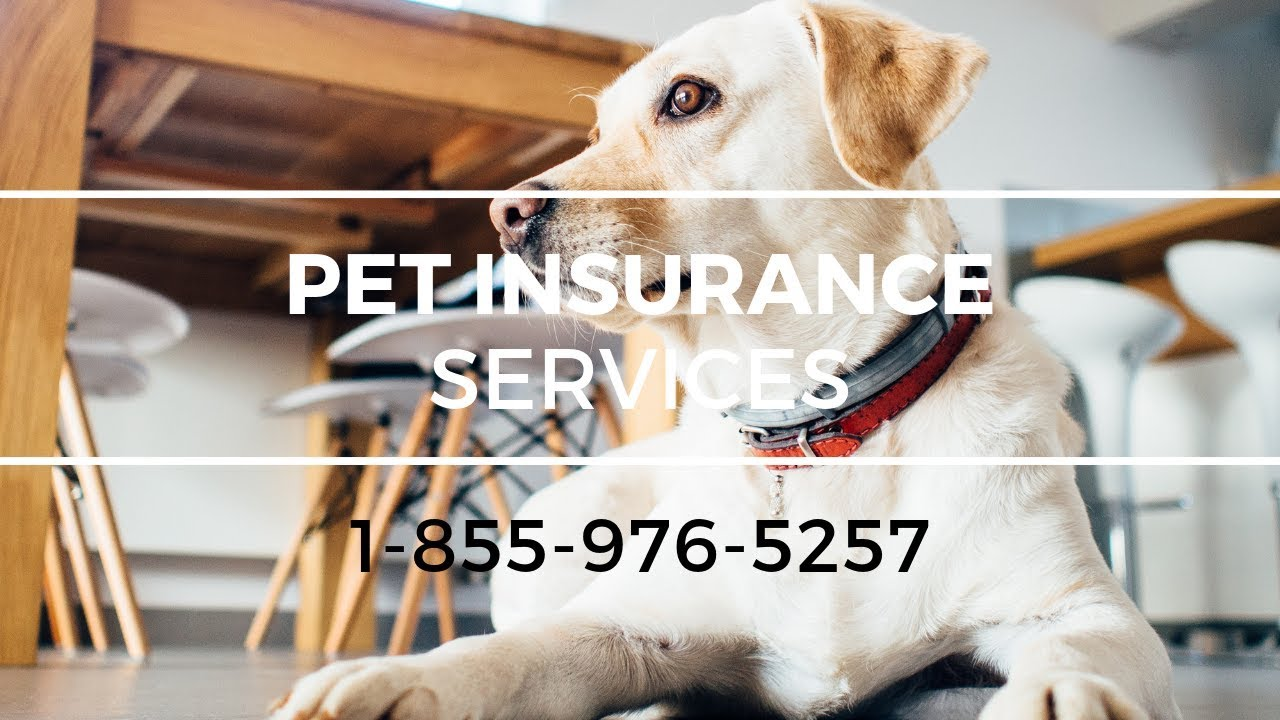 Pet Insurance Hewlett NY - Best Pet Health Insurance Cost