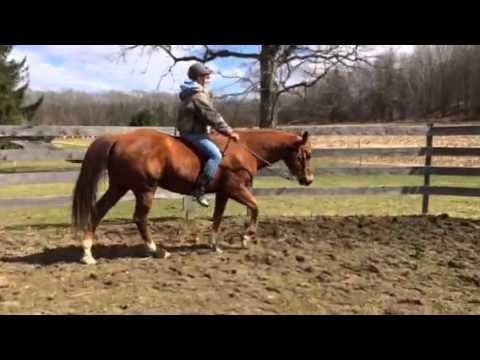 For sale: 12 year old chestnut quarter horse gelding - YouTube - photo#42