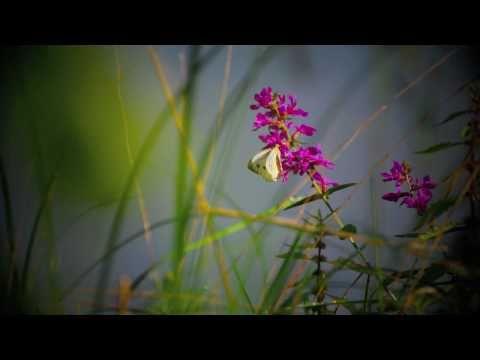 Franciszkańskim okiem 7 - Lato w jesień