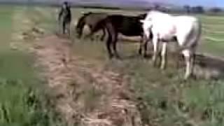 Конь - Буян