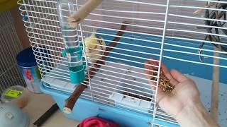 Попугай Корелла ►5◄ У нас первые успехи!