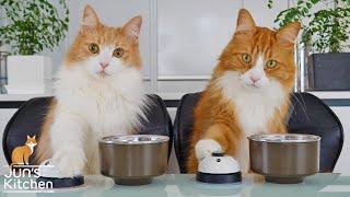 Учу своих котов звонить в звонок
