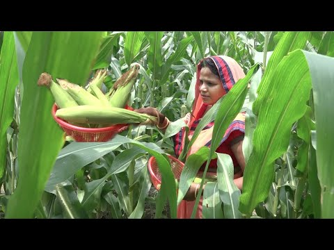 INDIAN DAILY MONSOON ROUTINE 2018, मसालेदार रोस्टेड बुट्टा BUTTA or BHUTTA STREET FOOD STYLE