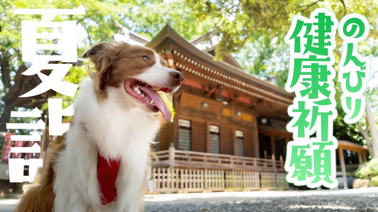 【犬猫神社?】ボーダーコリーと一緒に神社で健康祈願をしてきました【伊奴寝子社】