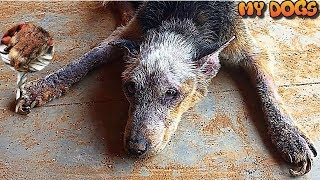 The Transformation Of This Abandoned Dog Found At A Construction Site Will Warm Your Heart