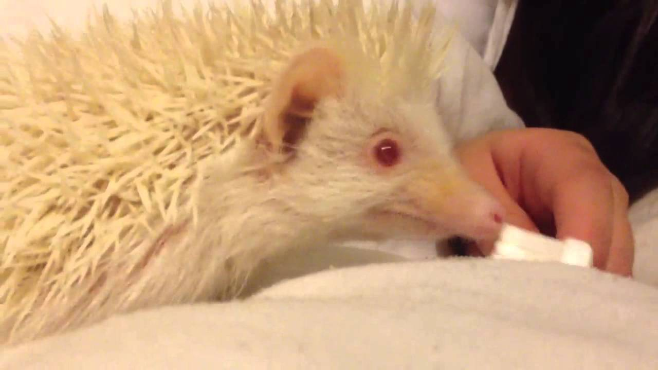 My Little Sonic Havin A Play With His Tooth Brush Youtube