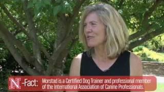 Companion Animal Careers:  Animal Training