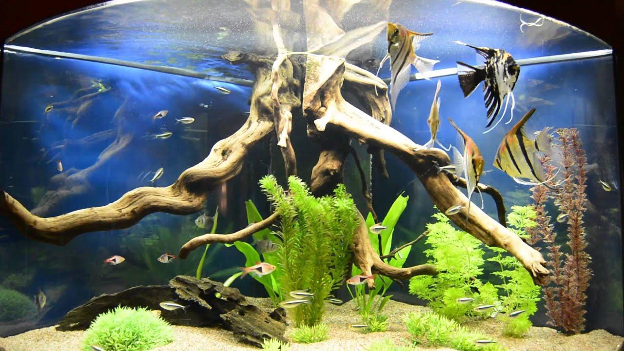 juwel trigon 190 aquarium youtube. Black Bedroom Furniture Sets. Home Design Ideas
