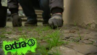 Realer Irrsinn: Unkraut-Posse in Potsdam