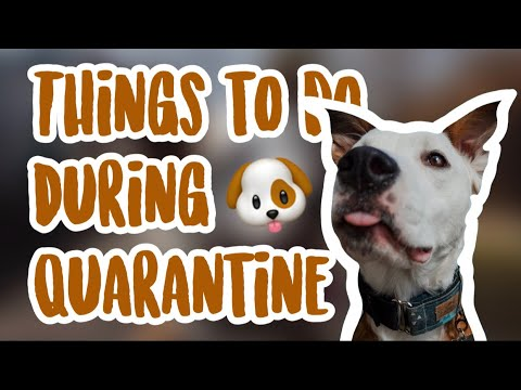 7-things-to-do-with-your-dog-during-quarantine-//-huffypuffs