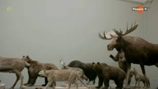 Śladami Yeti [film dokumentalny, lektor PL]