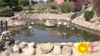 Отзывы отдыхающих об отеле Hauza Beach Resort 4*  г. Шарм-Эль-Шейх (ЕГИПЕТ)