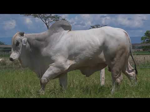 LOTE 057   GPO A 2780