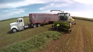 CY Harvesting, Chopping Hay 2014