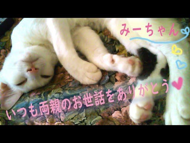 募集企画/わたしの猫video作品♪