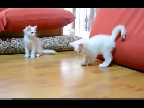 Funny Small Cat fails    Small cats jump fail - Small cat video compilation 2016 Part #04