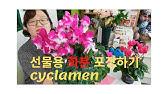 화분포장 배우기, 화분 포장 방법, 뉴질랜드 스타일, Wrapping plants, Wrapping Cyclamen plants