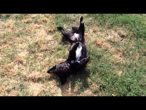 Ho sparato al mio cane (I shot my dog)