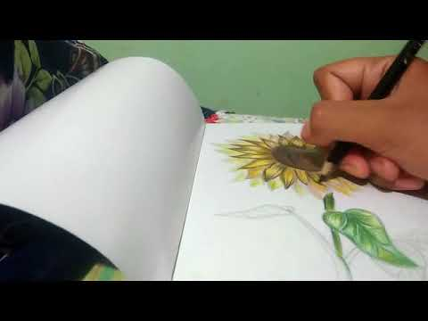 Simple Drawing Sun Flower Teknik Pewarnaan Pada Sketsa Bunga
