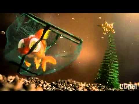 Fisch mag kein Weihnachten