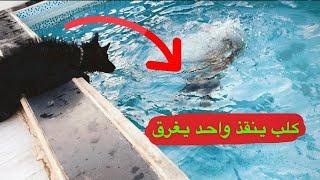 ردة فعل الكلب وآنا أغرق في المسبح 😱😱