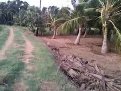 agricultural land sale Tirunelveli Call 9500011272