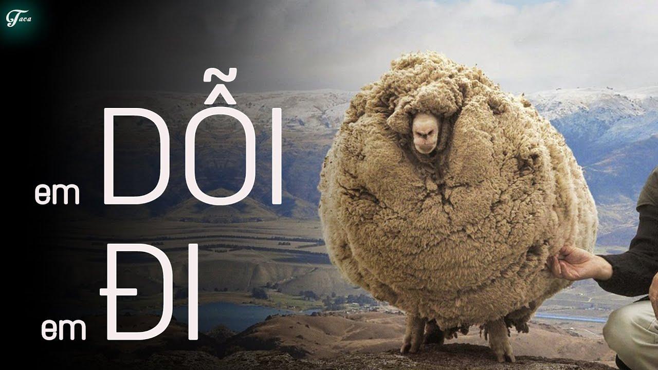 Sợ Bị Cạo Lông... Chú Cừu Quyết 'Bỏ Nhà Đi Bụi' Suốt 6 Năm