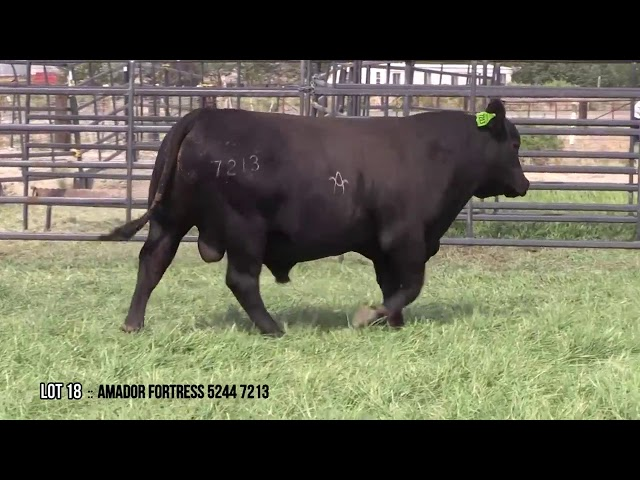 Mid Valley Bull Sale Lot 18