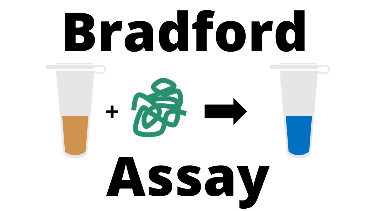 Download How to determine the Protein Concentration with the Bradford Assay
