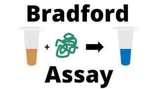 How to determine tнe Protein Concentration with the Bradford Assay