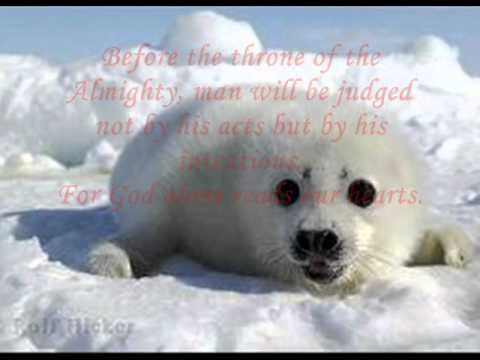 Protect Canada's Seals - Stop The Seal Hunt