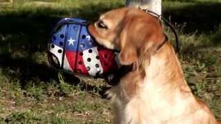 Golden Retriever, Great Dane & Dalmatian In American Pride Dog Muzzle