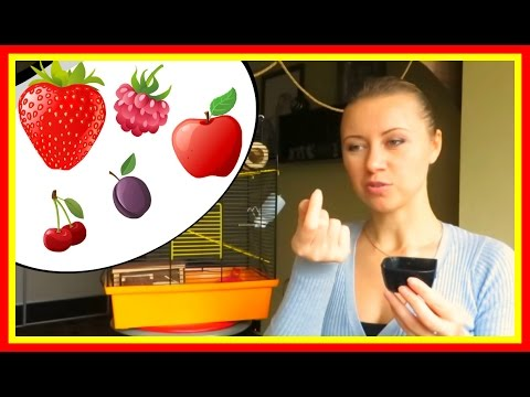 Как кормить джунгарского хомяка