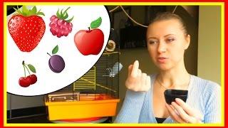 видео Чем кормить хомяка в домашних условиях: что можно