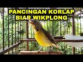 Kolibri Kelapa Gacor Buka Paruh  Mp3 - Mp4 Download