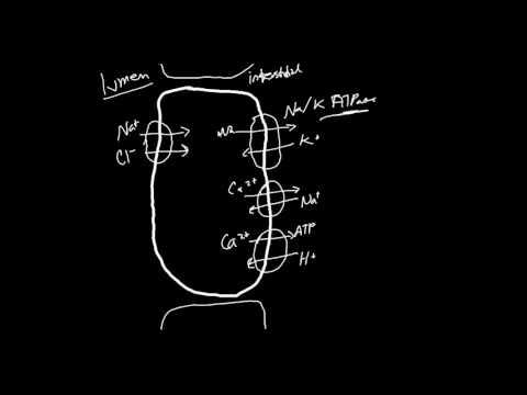 Thiazide Diuretics Made Simple