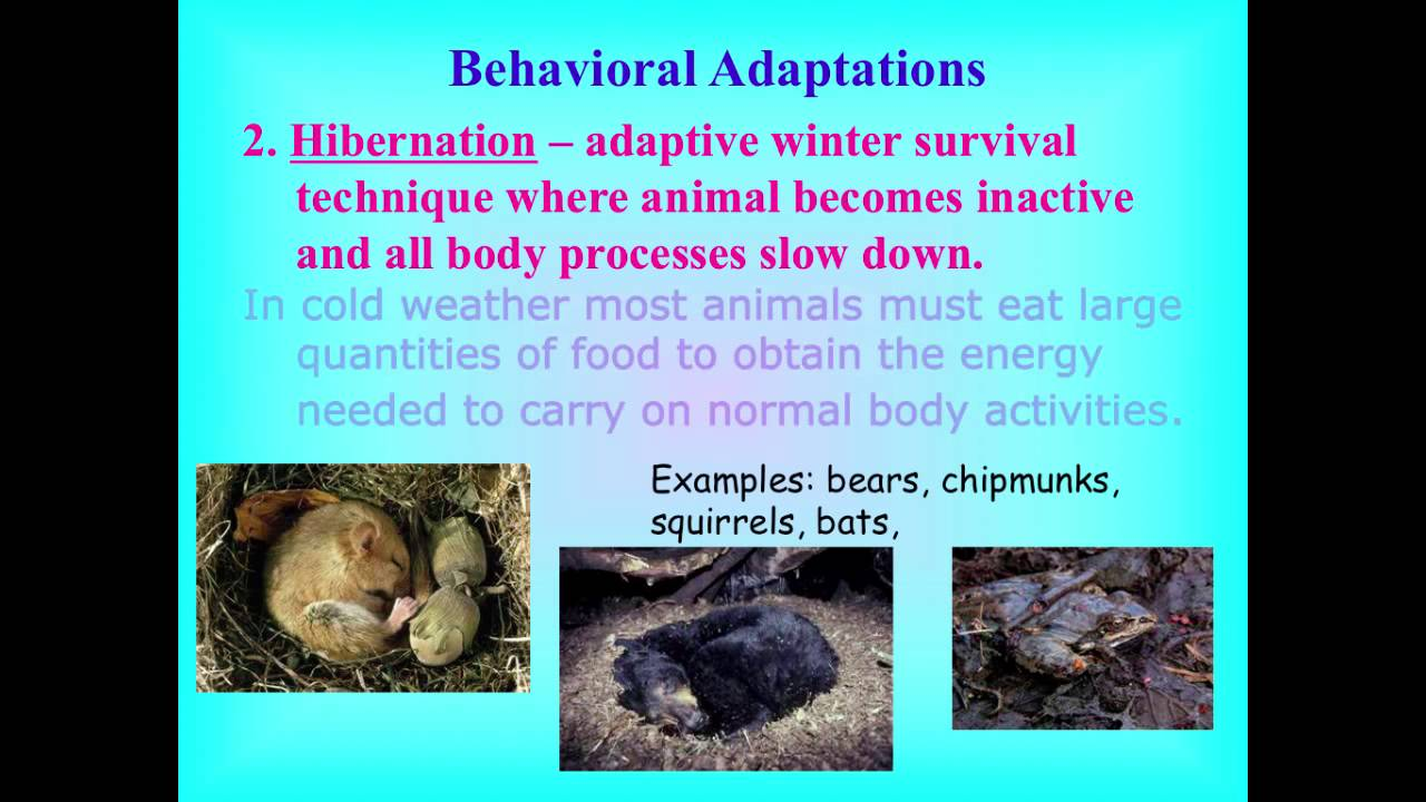 Behavioral adaptations - YouTube